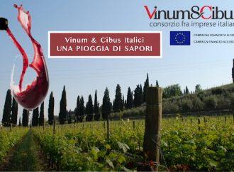 Veneto, terra di vino